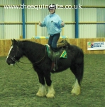 14.2hh safe irish cob happy hacker