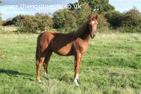 Quality 2012 Royal Classic Filly