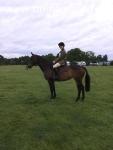 16hh TB mare. Eligible ROR