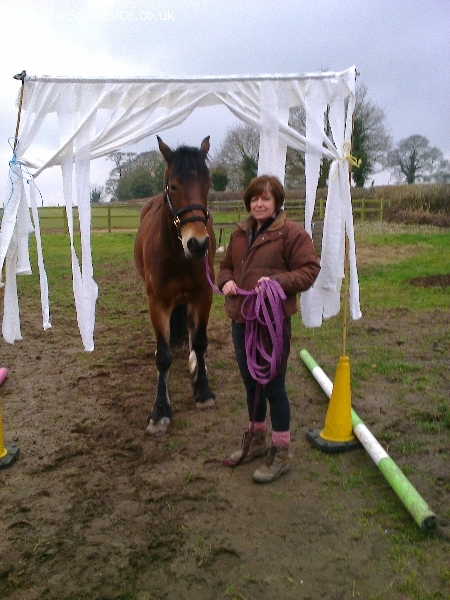The Equine Site Allrounder Horses Complete Horse Services