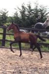 Special moving filly by St Moritz Junior