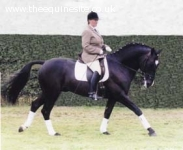 Knightley Park Life approved ID Sports Horse