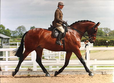 Jayne Ross & Twinshock Warrior at Arena UK. Image, courtesy of Equinational